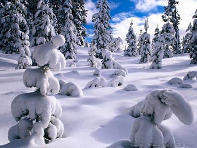 snowscenes.jpg